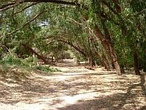 Parc Natural de La Mata